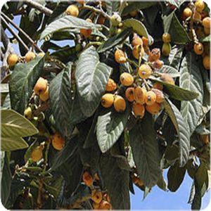 びわの葉温灸のイメージ